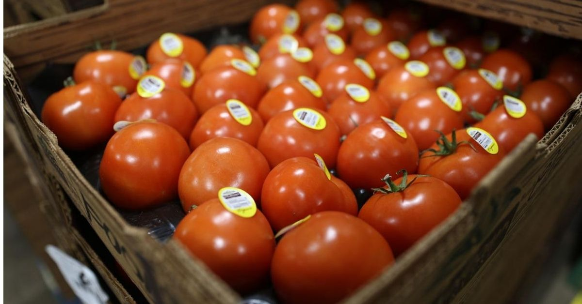 Tomatoes business ideas